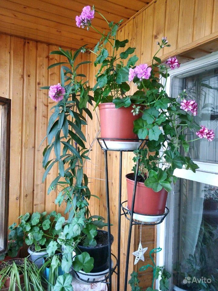Комнатные растения купить на Зозу.ру - фотография № 1
