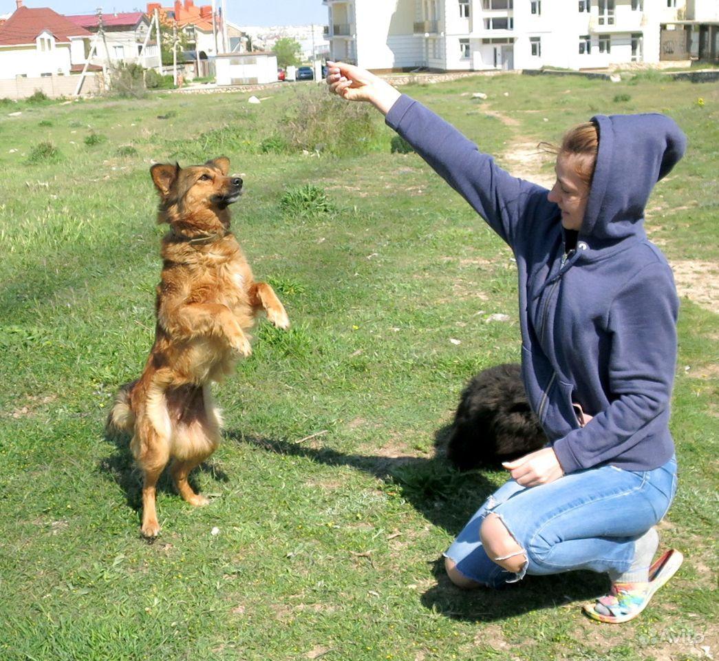 Отдам красивую молоденькую собачку небольшую