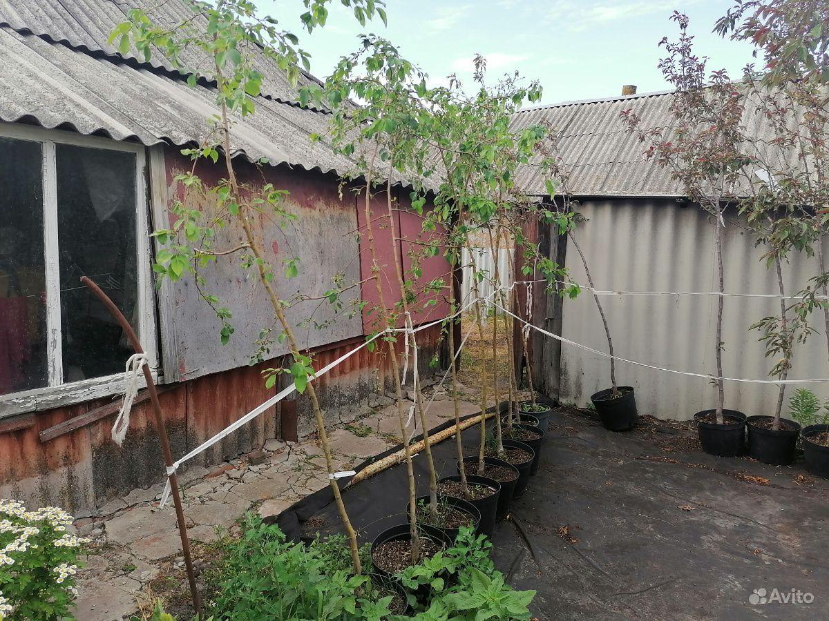 Декоративные деревья оптом купить на Зозу.ру - фотография № 4
