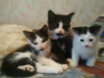 Как подать объявление отдам котенка авито 24 красноярский край доска объявлений недвижимость в сюидринское
