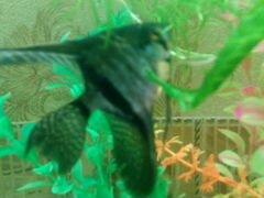 Рыбы и растения