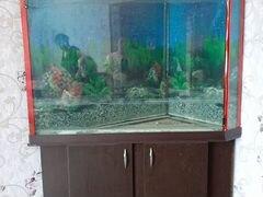 Продам угловой аквариум на 450 литров с тумбой