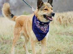 Собака Чили в дар