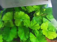 Набор аквариумных растений