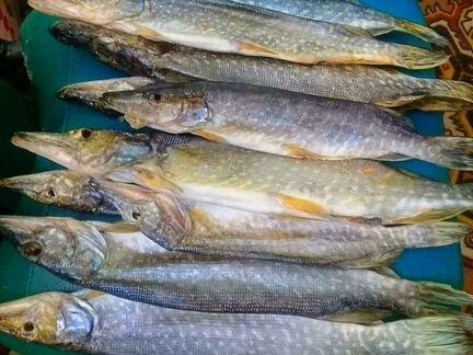 Вяленная рыба объявление продам