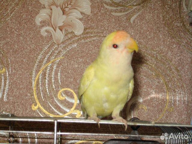 33 попугая магазин: