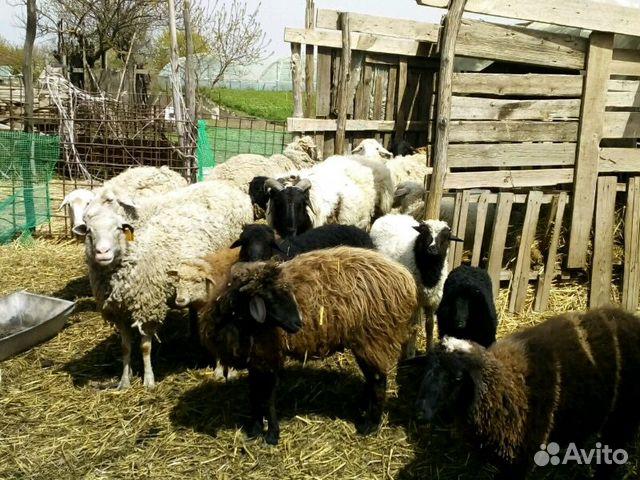 капризничают, купить овец в ростовской области диодного