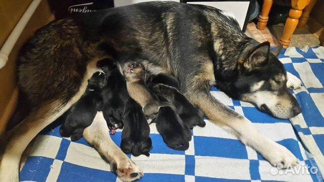 Собаки в оренбурге в дар