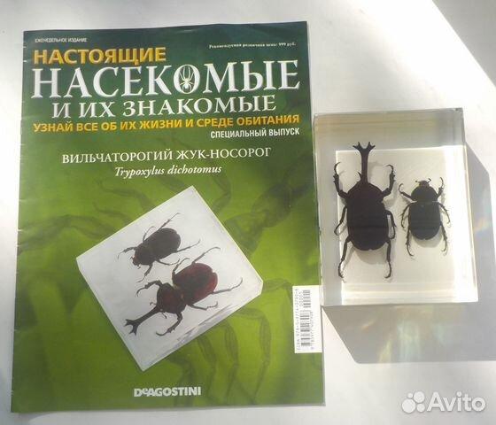 Купить в минске насекомые и их знакомые