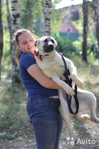 Симпатяга щенок Локи в дар в добрые руки купить на Зозу.ру - фотография № 4