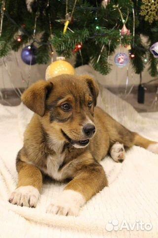 Собака купить на Зозу.ру - фотография № 1
