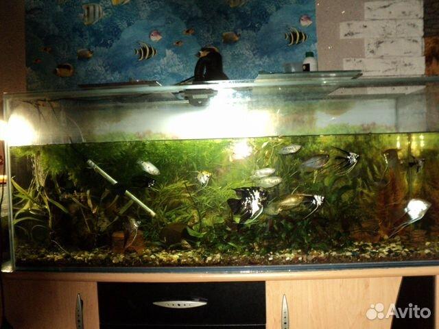 Продам аквариум на 250л с оборудованием и тумбой  купить 1