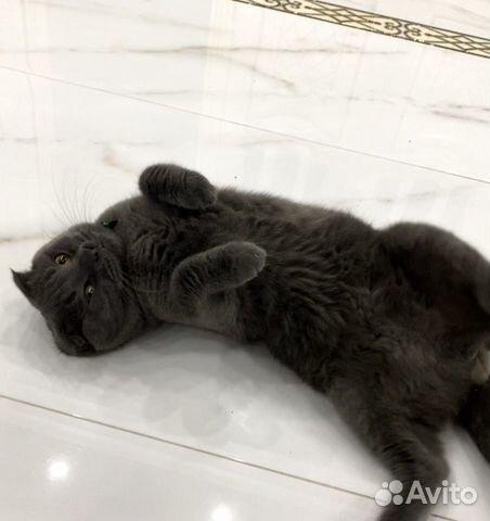 Кот на вязку  89280869996 купить 4