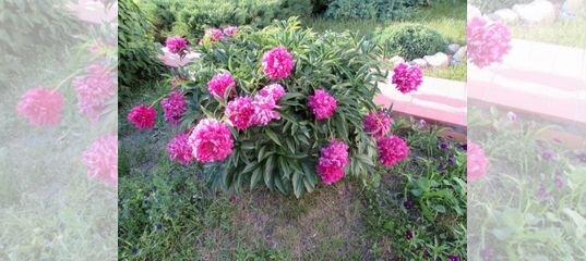 Цветы в омске в нефтяниках