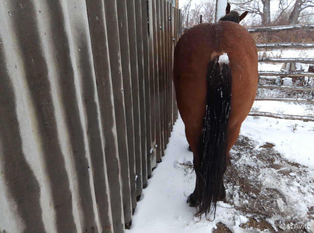 Лошадь  89236928993 купить 4