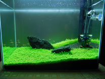 Оформление и дизайн аквариума с растениями