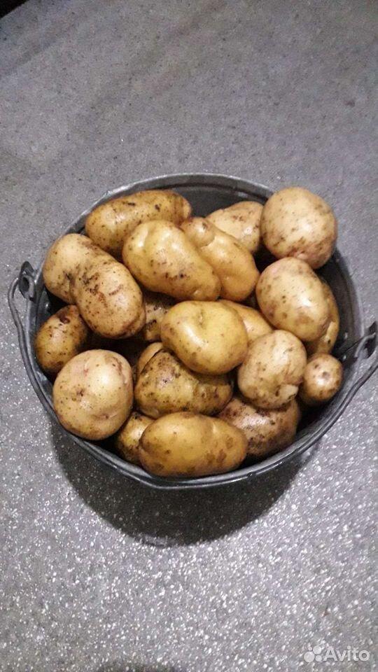 Kartoffeln  89532618366 kaufen 1