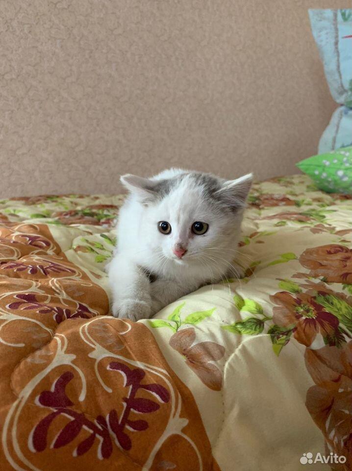 Котята в добрые руки бесплатно  89876955069 купить 4