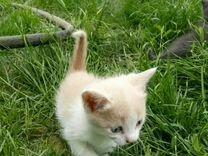 Котята в добрые ручки