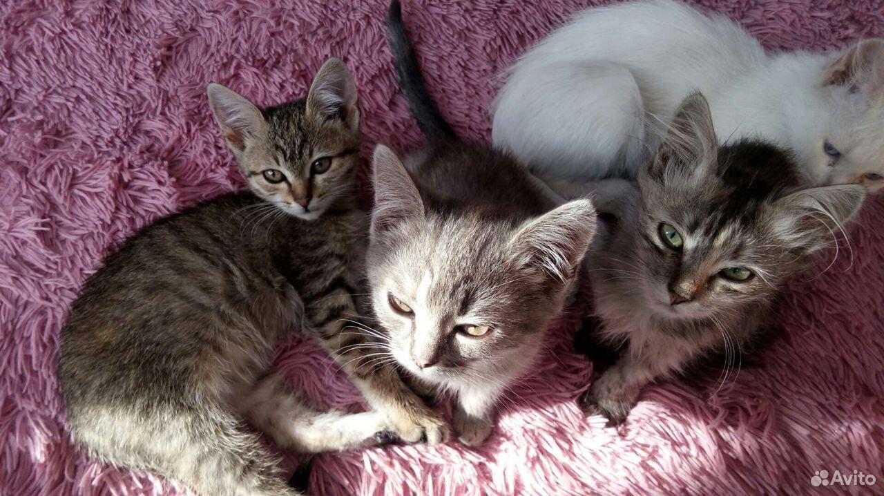 Котята с доставкой  89524383381 купить 4