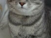 Умный котик ищет дом