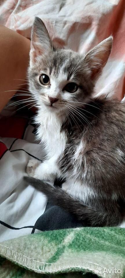 Кошка  89373713799 купить 2
