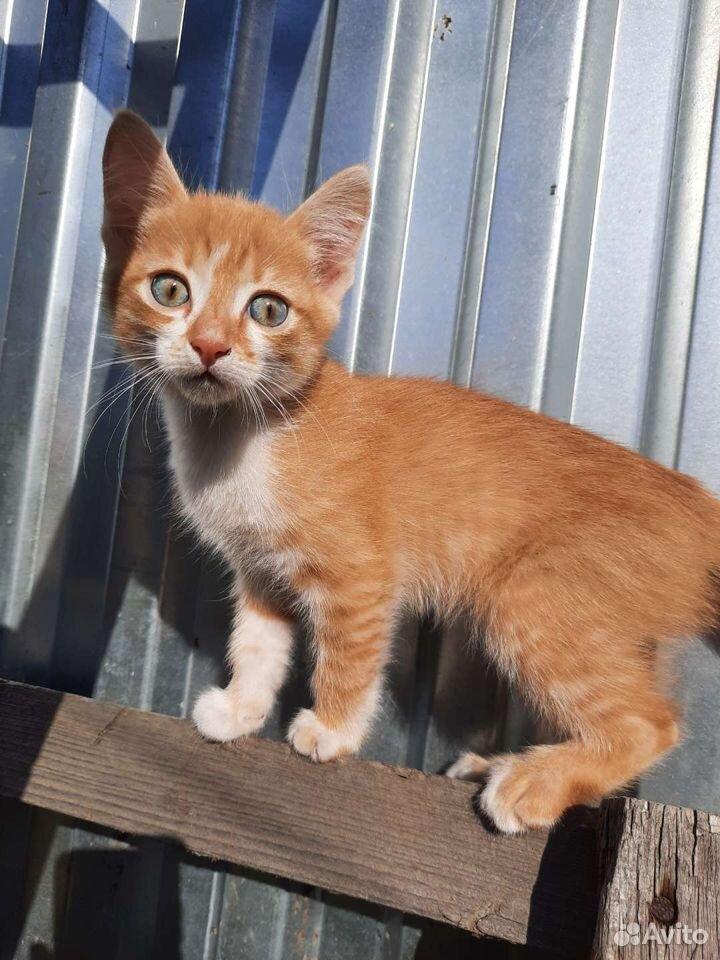Кошка  89136331684 купить 2