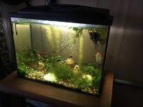Аквариум с рыбами 80 литров