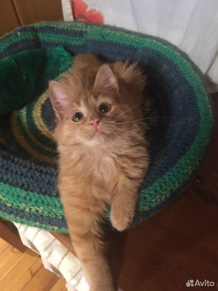 Рыжий котенок  89276181922 купить 1