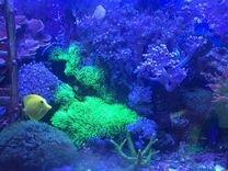 Аквариум морской