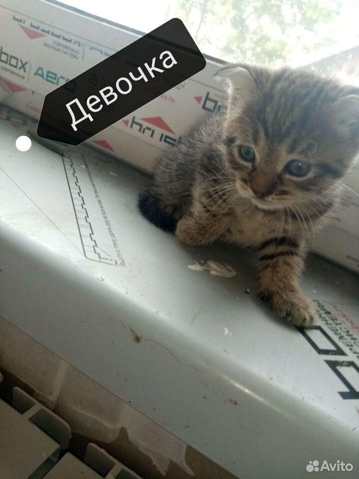 Кошка  89532797349 купить 4
