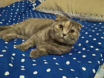 Кошечка вислоухая — Кошки в Геленджике